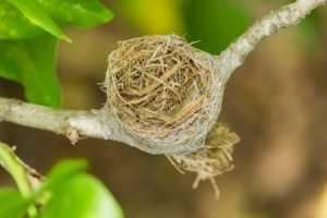 Empty bird nest on a branch.