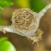 Empty bird nest on a branch.