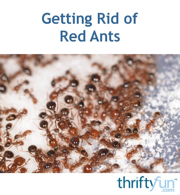 Getting Rid of Red Ants | ThriftyFun