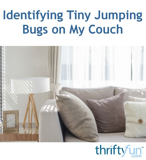 Identifying Tiny Jumping Bugs On My Couch Thriftyfun
