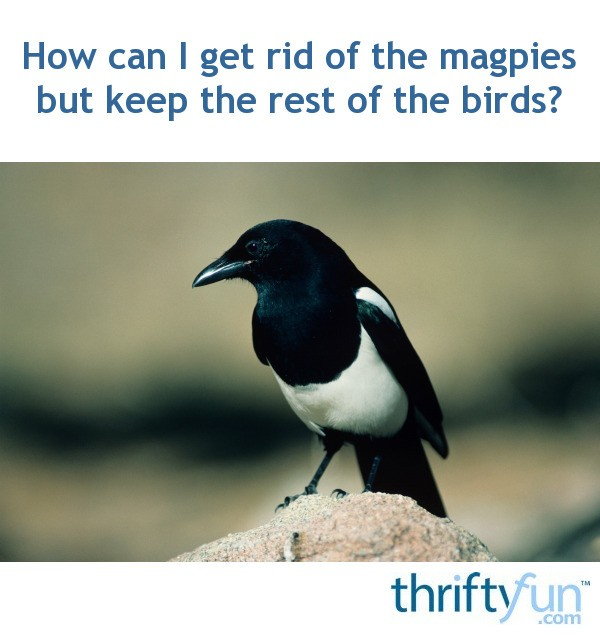 How To Get Rid Of Birds In Backyard how can i get rid of the magpies but keep the rest of the birds