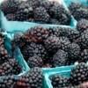 pints of blackberries