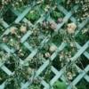 A garden trellis with flowers growing in it.