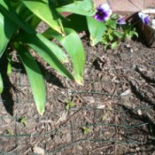 Keep Pets out of Flower Garden - edging fence on ground to keep pets out of flower garden