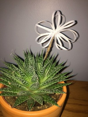 Ribbon Flowers - ribbon flower in pot with succulent