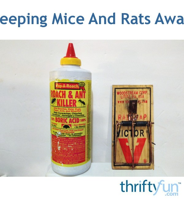 how to keep mice and rats away
