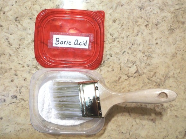 A paintbrush dipped in a container of boric acid.