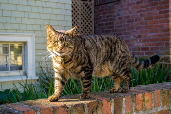 How To Prevent Neighborhood Cats From Peeing And Spraying On Doors