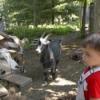 John Hall and Goats