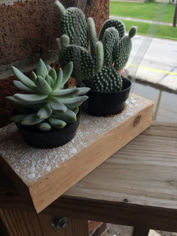 Easy DIY Plant Holder - cactus and succulents in pots sitting in plant holder