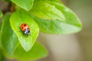 A ladybug sitting on a leaf.