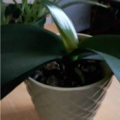 Identifying a Houseplant - plant with dark green leaves