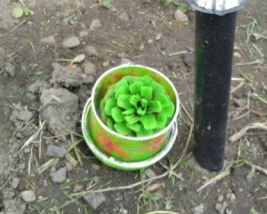A pinecone painted green and placed in a small pot.