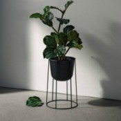 What Is This Houseplant? - plant with dark green leaves in a standing planter