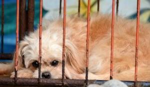 A little dog in a rusty crate.
