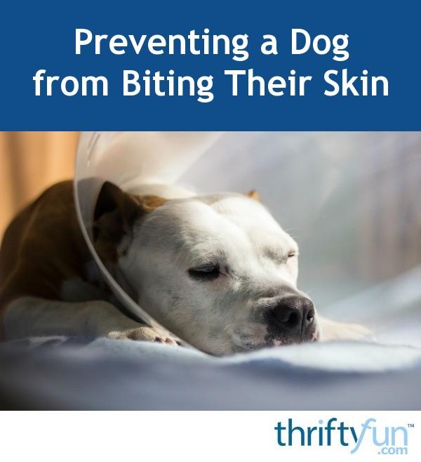 Preventing Leg Biting Dog