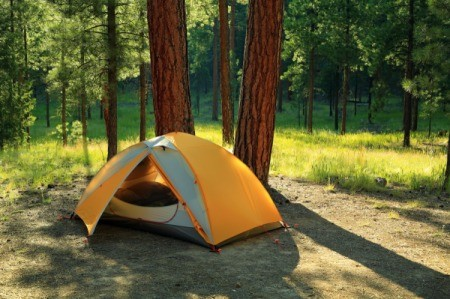 A tent set up below tall cedar trees.