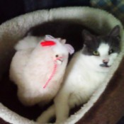 Annie's New Bed Buddy - black and white cat with stuffed llama in cat bed
