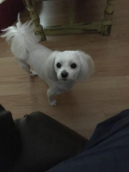Dog Aggressive Toward Owner at Night - white dog