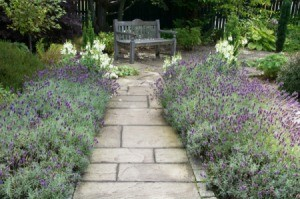 A stone garden path surrounded by lavender.