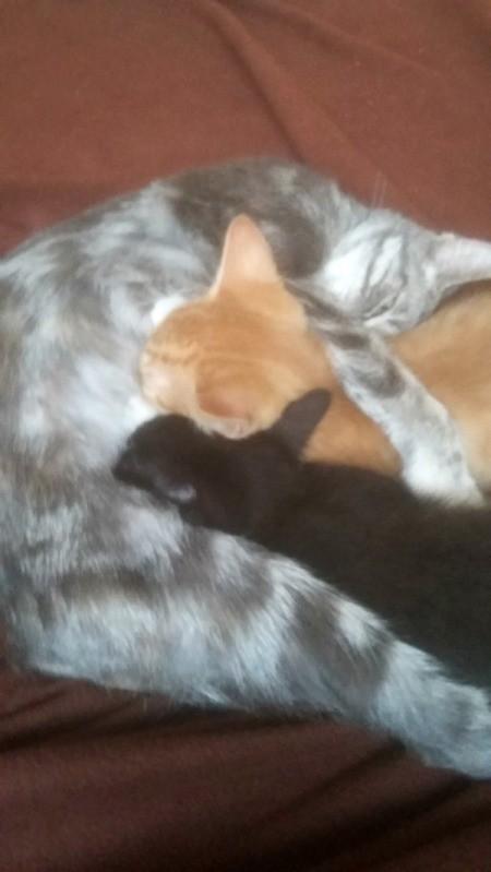 Kittens Nursing on Female Cat