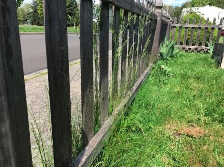 A grassy fenceline with no discernible plants.