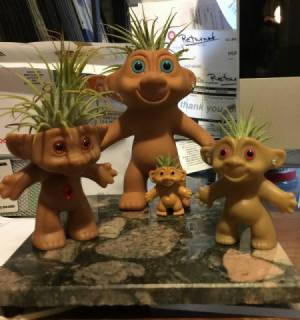 Air Plant Trolls - trolls with plants added