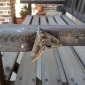 A moth on a wooden bench arm.