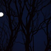 One Cold Wintry Night - very dark view of tree and night moon