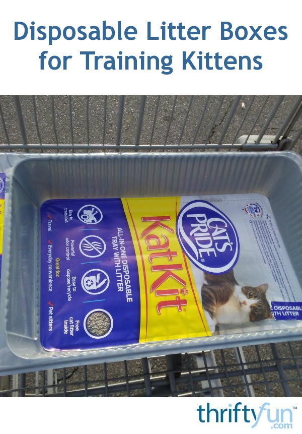 Disposable Litter Boxes For Training Kittens Thriftyfun
