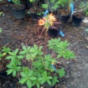 Take Photos When Visiting Plant  Nursery - plant with orange flowers