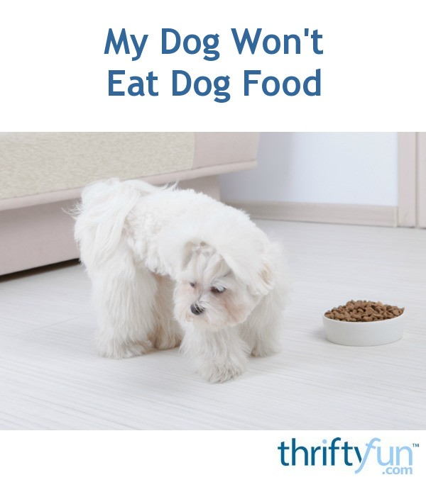 My Puppy Won T Eat My Dog Won T Eat Dog Food Thriftyfun