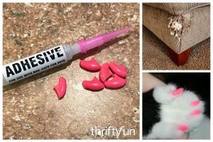Using Nail Caps on Pets