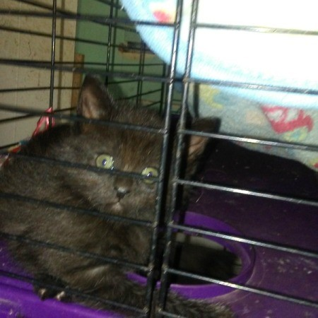 Black Kitten - kitten in crate