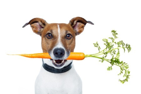 dog with a carrot in its mouth