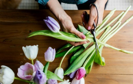 Cutting Flower Stems