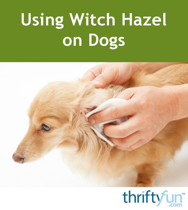 Can You Use Witch Hazel On Dogs