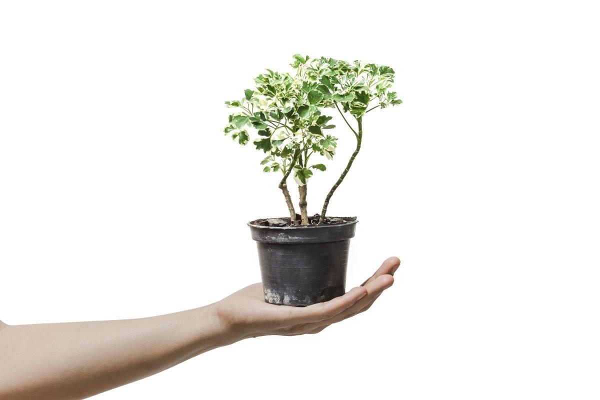 A Good Tree For Wedding Gift Thriftyfun