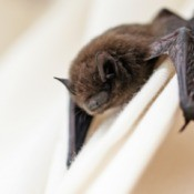 Close-up of Bat