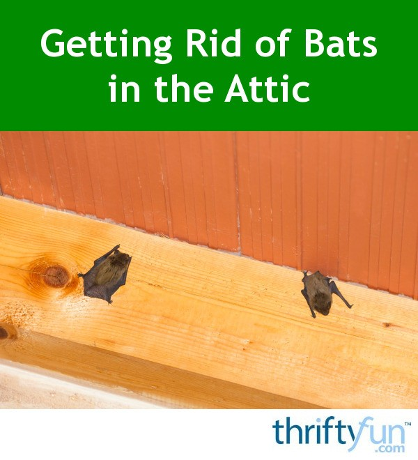 Getting Rid Of Bats In The Attic Thriftyfun