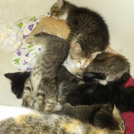 A pile of sleeping kittens.
