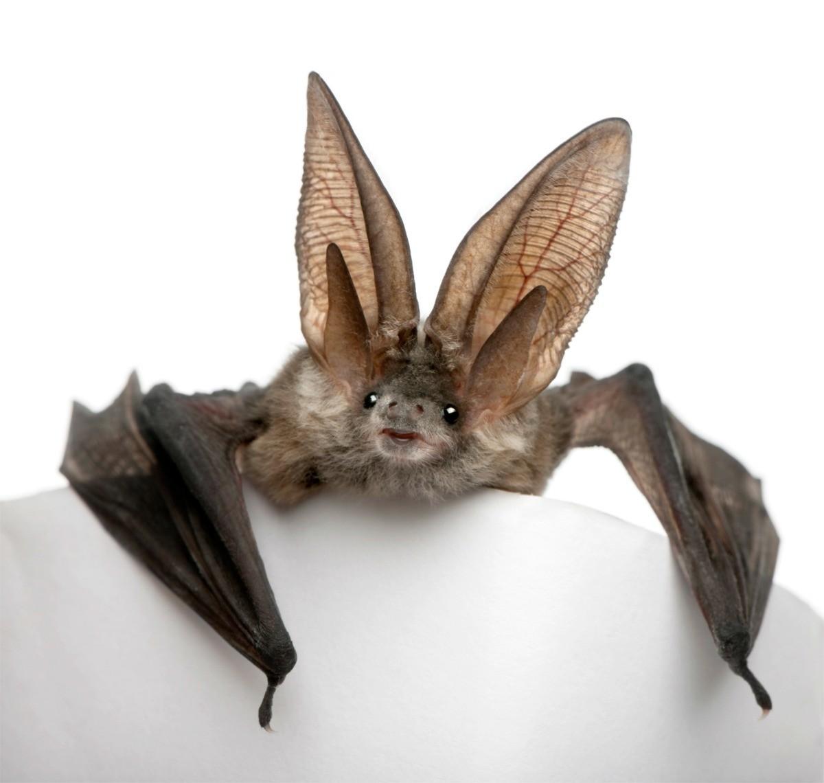 Bat Living Above Our Front Door