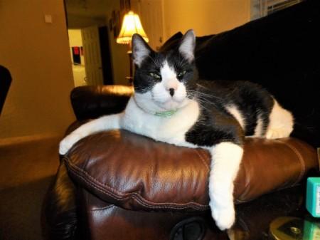 Teddy (Mixed Breed Cat)