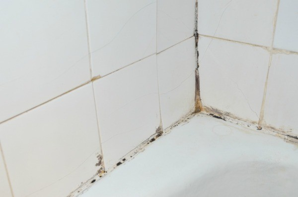 how to clean mildew off grout in shower