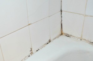 Shower Mildew