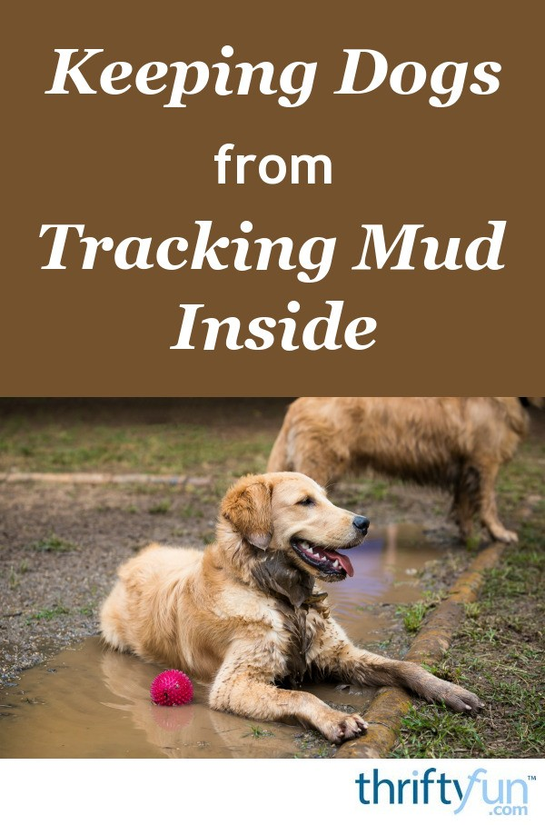 Keeping Dogs From Tracking Mud Inside Thriftyfun