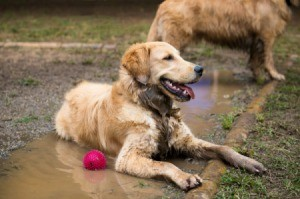 Dog Playing in Mud