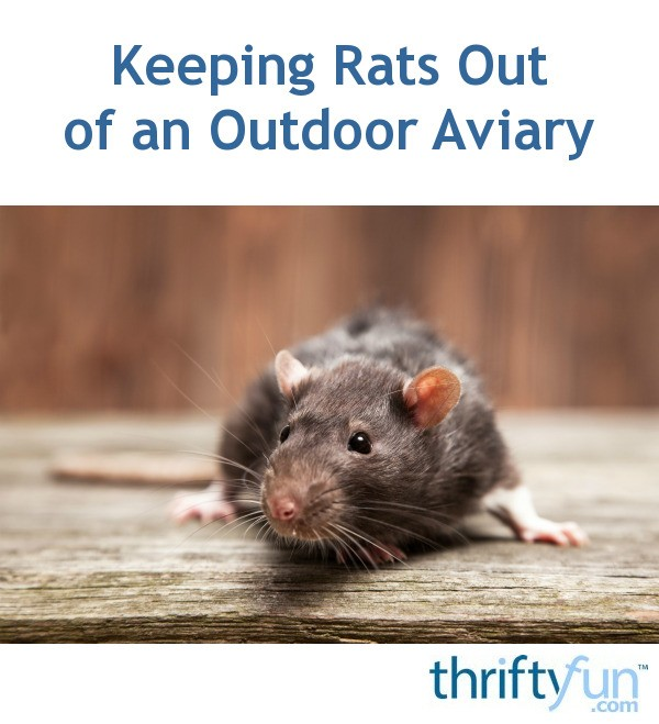 Keeping Rats Out Of An Outdoor Aviary Thriftyfun