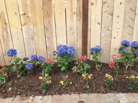 Select Plants for Best Value