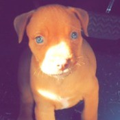 What Breed Is My Dog? - light brown puppy